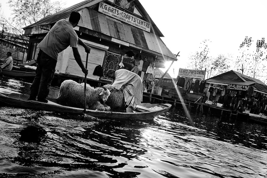 Dal Lake in Srinagar, People gets prepared for the Eid festval on 17, November 2010. After the violence in August 2010, the situation in kashmir still uncertain.Political leaders are under House-arrest and the people on the street feels the oppression of the Indian army.Everyone is waiting, and everybody knows Kashmir is going to explode again.