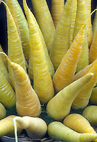 Yellow carrots Yellowstone, Daucus carota var. sativus, unusual vegetable color in yellow gold, root crop, picked and in harvested arrangement.