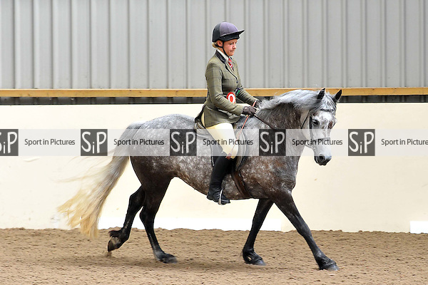 Classes 7 to 11. Eastern Counties Area Connemara Show.Brook Farm Training Centre. Essex. 04/07/2015. MANDATORY Credit Ellie Ingram/Sportinpictures - NO UNAUTHORISED USE - 07837 394578