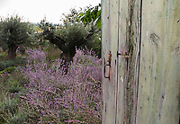 Europe/France/Languedoc-Roussillon/30/Gard /Montaren:  Le jardin  de la  Chambre d'Hôte: le Clos du Léthé