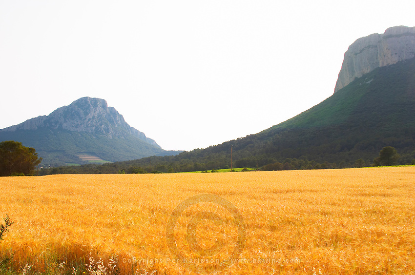 The Pic St Loup mountain top peak. The Montagne Massif d'Hortus mountain cliff. Pic St Loup. Languedoc. A wheat field in the foreground. France. Europe.
