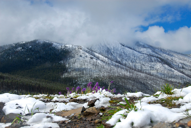Yellowstone snowfall in July