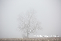 63808-03108 Bare tree in fog Marion Co. IL