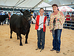 Replacement heifer show and auction, Friday at the 80th Amador County Fair, Plymouth, Calif.<br /> .<br /> .<br /> .<br /> .<br /> #AmadorCountyFair, #1SmallCountyFair, #PlymouthCalifornia, #TourAmador, #VisitAmador