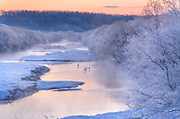 Hokkaido Island, Japan<br /> Dawn on open waters of Setsuri River, with Japanese cranes (Grus japonensis) near Kushiro