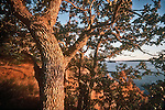 San Juan Islands; Garry Oak, Waldron Island, Point Disney, Nature Conservancy Preserve; Washington State, Pacific Northwest, U.S.A.,