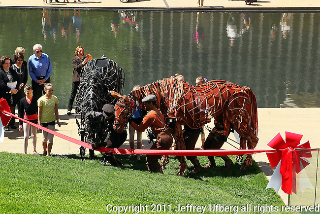 May 10, 2011 New York: War Horses graze on Lincoln Center's Grass on May 10, 2011 in New York.