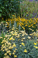 Achillea Moonshine AGM yarrow in yellow colors, with Tickseed Coreopsis verticillata Zagreb yellow color theme perennial garden
