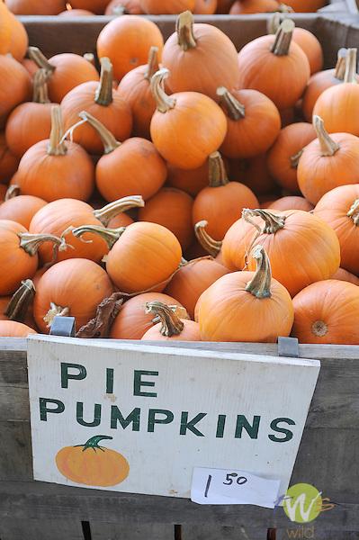 Vegetable stand.Pie pumpkins