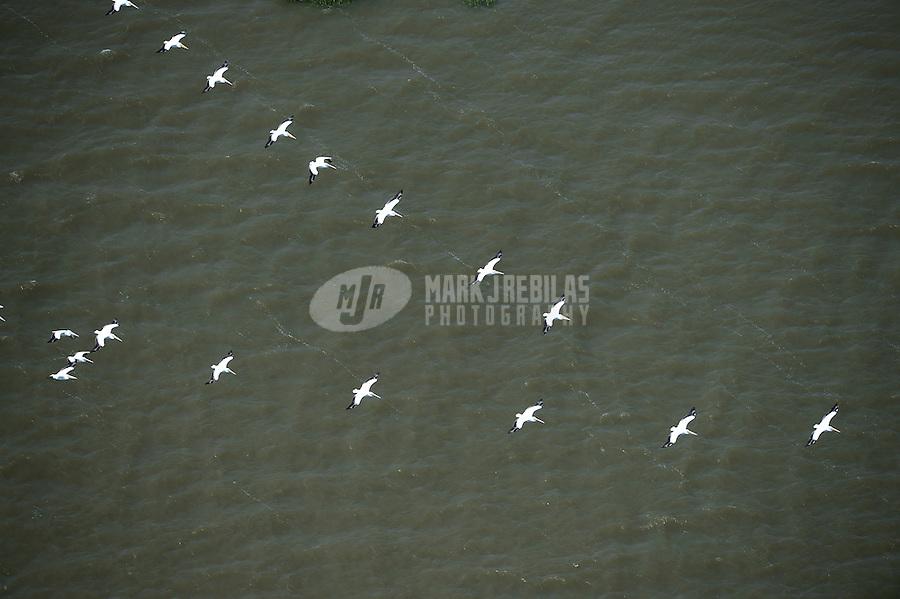 pelican bird birds migration water ocean aerial flying nature Houston Baytown Texas flock formation
