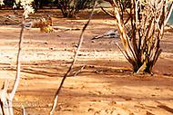 Image Ref: CA571<br /> Location: Desert Park, Alice Springs<br /> Date of Shot: 17.09.18