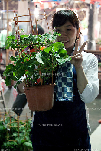 "July 8, 2014, Tokyo, Japan - A vendor shows her plant at the ""Iriya Asagao-ichi Market Festival"" on July 8, 2014. The market festival was the most famous for asagao plants (morning glories) in Edo period, and has been held on July 6, 7, and 8 at the Temple of Iriya Kishimojin in Tokyo every year since late Edo period. The flower was introduced into Japan 1200 year ago from China for medical uses. (Photo by Rodrigo Reyes Marin/AFLO)"