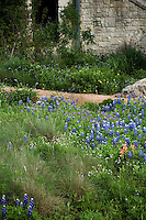 Wildflower meadow lawn with lupines, paintbrush flowers and Muhly grass in Lady Bird Johnson Wildflower Center, Texas