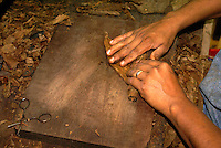 Close up of a woman's hands rolling a cigar in the Tabacalera Alberto Turrent  cigar factory  near San Andres Tuxtla , Veracruz, Mexico              .