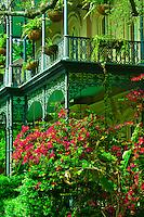 Bougainvillea (flowering plants), Garden District, New Orleans, Louisiana, USA