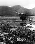Loch Slapin, Isle of Skye (1947)