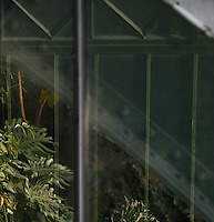 Tropical Rainforest Glasshouse (formerly Le Jardin d'Hiver or Winter Gardens), 1936, René Berger, Jardin des Plantes, Museum National d'Histoire Naturelle, Paris, France. Detail showing the sweeping arch of the Art Deco style Tropical Rainforest Glasshouse through the windows of the New Caledonia Glasshouse. The windows are fringed with foliage which reflects in the glass.