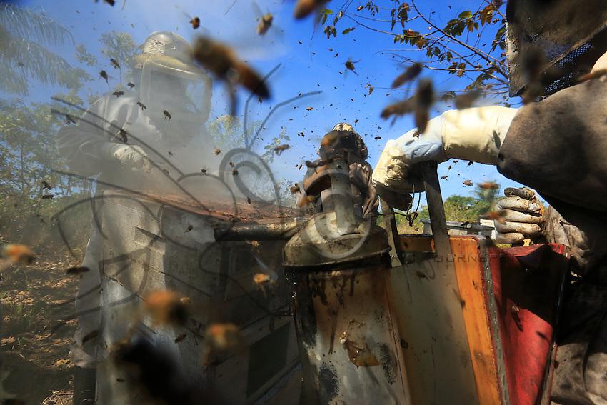 The smoker comes into play, but the furious guard bees allow no respite for the honey thieves.///L'enfumoir entre en action mais les gardiennes furieuses ne laissent aucun répit aux voleurs de miel.