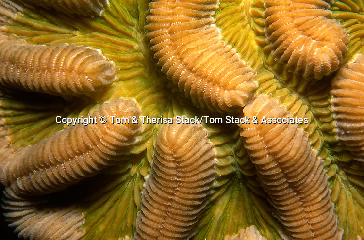 Coral, closeup