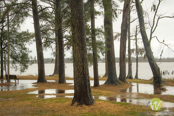 Roanoke River front, Williamston, NC. High water and trees.