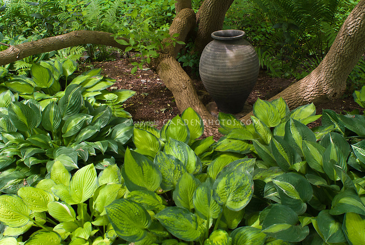 Hosta Shade Garden With Ferns Ornamental Planter Urn Pot
