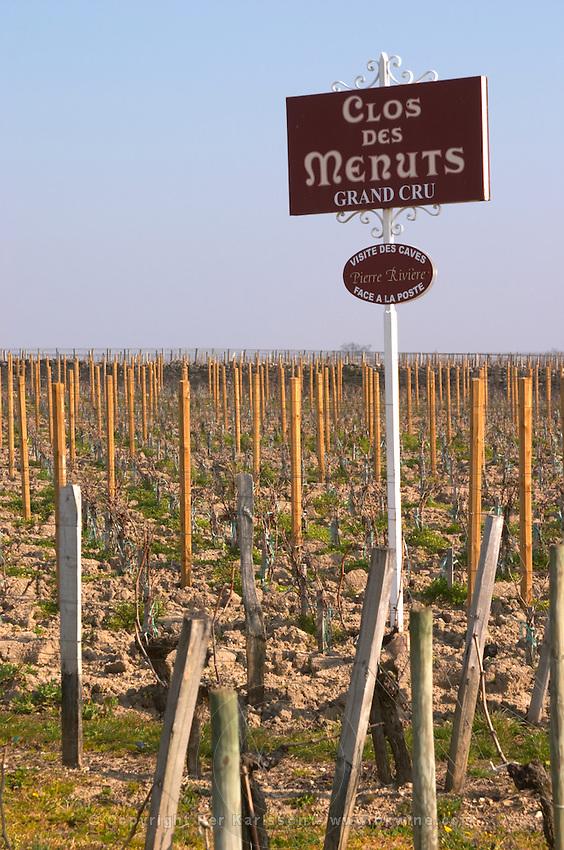 Vineyard. Clos de Menuts. Saint Emilion, Bordeaux, France