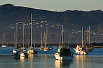 Boats anchored in Morro Bay, California