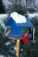 Blue birdhouse with downy woodpecker