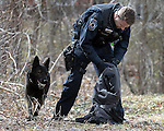 Manchester Police K9 officer Tomasz Kaczerski, goes through the jacket believed to be that of a robbery suspect, as his dog Drago is rewarded with a ball for making a hit on the find, Wednesday, March 16, 2016, in Vernon. The incident happened around 2pm after a reported armed robbery of the VCA Animal Hospital at 155 Talcottville Road in Vernon. The suspect fled on foot through a residential area down to a large open area near the Hockanum River where he was apprehended by Police. Manchester Police assisted with a K9 team for a suspect who was believed to be armed. Clothing items were left behind in  at least two locations, including here, a short distance away on Pleasant View Road, which is the intersected street from the animal hospital. (Jim Michaud / Journal Inquirer)