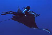 freediver with manta ray, Manta birostris, Mexico ( dm )