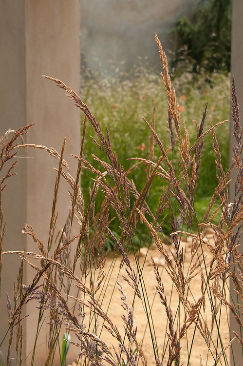 Calamagrostis × acutiflora 'Karl Foerster', early July. Enduring Freedom? conceptual show garden, RHS Hampton Court Flower Show 2011.