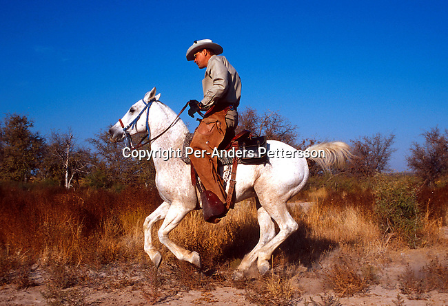 An unidentified member of a Texas Rangers unit ridong on his hourse on October 22, 1999 in Midland, Texas, USA. Texas Rangers is an elit force founded in the late 19th century that mainly combated stock theft and bank robberies. There's only about one hundred officers in service in Texas. The unit has been the motive for several movies and comic books including the still popular television series Texas Rangers starring Chuck Norris..Photo: Per-Anders Pettersson