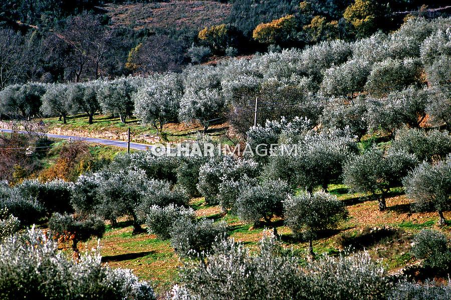 Plantação de oliveiras em Tras os Montes, Portugal. 1999. Foto de Juca Martins.