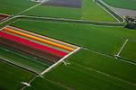 Nederland, Noord-Holland, Gemeente Harenkarspel, 28-04-2010; bloembollenvelden met voornamelijk tulpen ten westen van Tuijenhorn, de dijk is Westfriese Dijk (onderdeel van de  .Westfriese Omringdijk, vroeger zeewering) .Tulip bulb fields, the dike is Westfriese Dijk (part of the.Westfriese Omringdijk, former seawall).luchtfoto (toeslag), aerial photo (additional fee required).foto/photo Siebe Swart