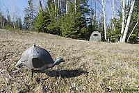 Wild turkey decoy