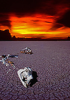 Climate change - Animal Skeleton on cracked Earth, Global Warming and our Environment,