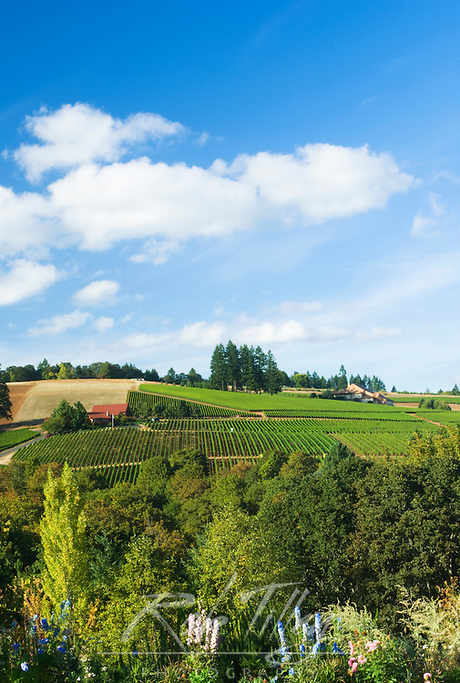 NA; USA; Oregon; Willamette Valley; Dundee; Red Hills; Domaine Drouhin Vineyard;