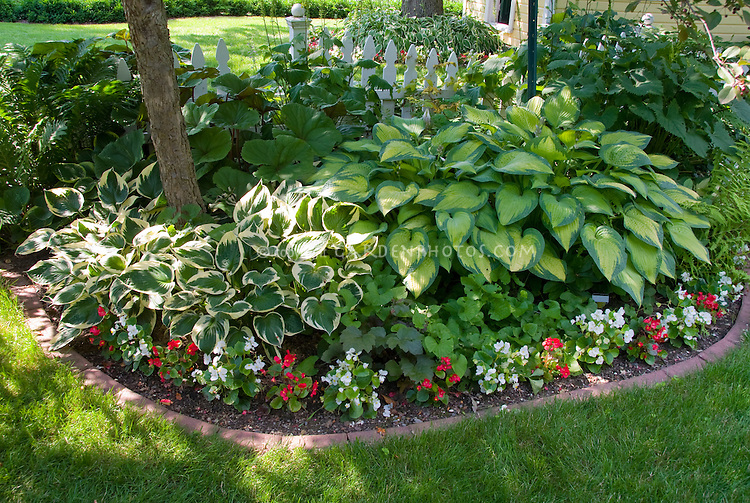 Shade Garden With Mostly Foliage Plants Hostas, Begonias, Tree, Brick  Edging, Lawn