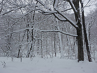 FOREST_LOCATION_90183