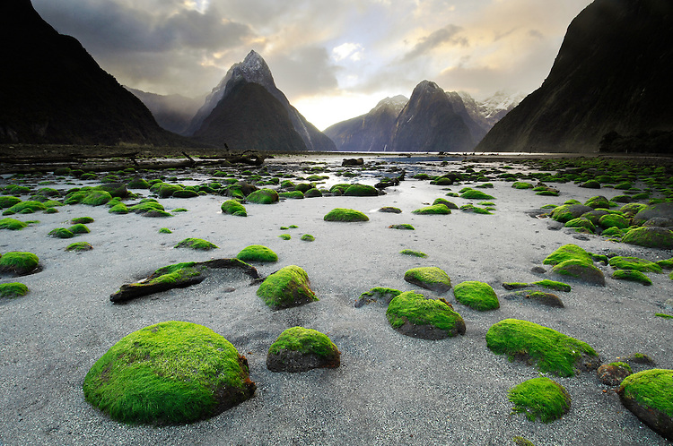 Mossy green rocks at low tide in front of Mitre Peak, Milford Sound, Fiordland National Park, South Island New Zealand