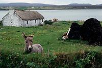 FILE PHOTO  -Pallatomish, Ireland<br /> <br /> <br />  Photo : Agence Quebec Presse