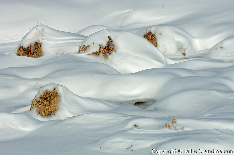 Wetland covered in snow<br /> Timmins<br /> Ontario<br /> Canada
