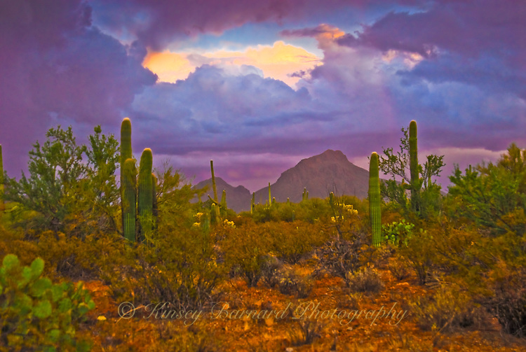 &quot;DESERT STORM&quot;<br />