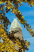 An autumn scene in Charlotte, North Carolina. Bank of America tower in framed by colorful yellow leaves on tree branches.