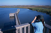 Birder on boardwalk tower, Birding center, Port Aransas, Mustang Island, Texas, USA,