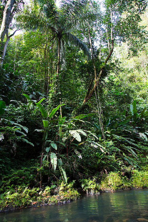 Costa Rica, Corcovado National Park, Osa Peninsula