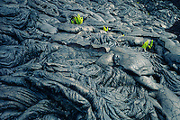 Pahoehoe lava and kupukupu or common swordfern<br />