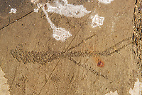 Pictographs on rock on Island in Lake of the Woods<br />Kenora District<br />Ontario<br />Canada