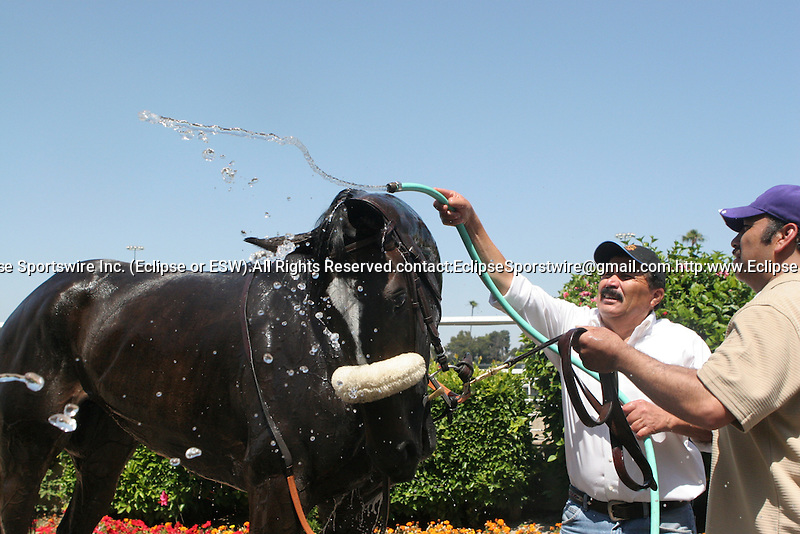 27 June 2009: Zenyatta wins the Vanity Handicap (GI) at Hollywood Park in Inglewood, CA