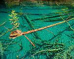 Sichuan Nature